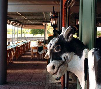 Siga la vaca