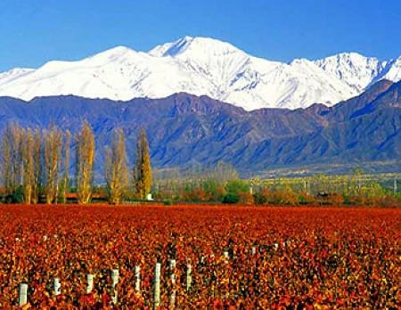 Rutas del vino en mendoza argentina hotel viaje com for Ambientes de argentina